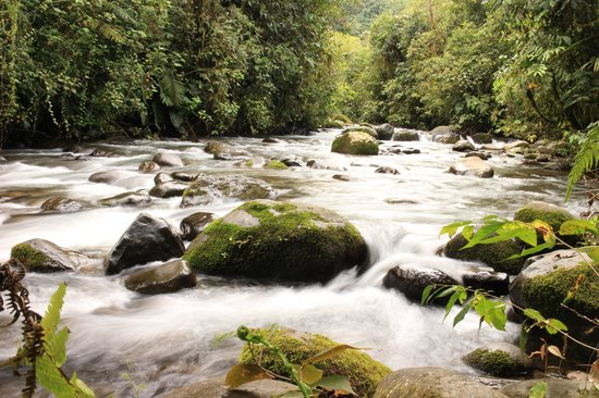 Maquipucuna Cloud Forest Reserve: The local swimming hole