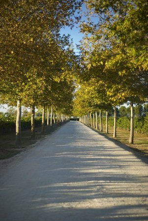 Rymill Coonawarra: The Plane Trees