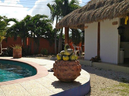 Villa Punta Salina: porch and pool