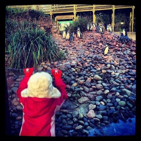 Safari Zoo: Penguin enclosure