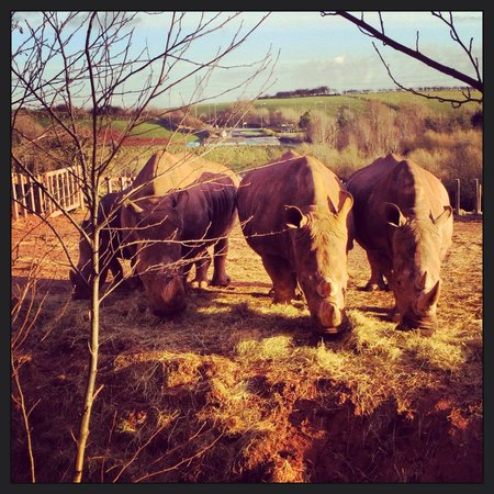 Safari Zoo: Rhinos chilling in the winter sun