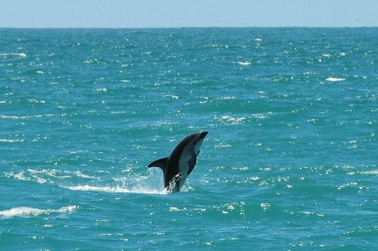 Whale Watch: dolphin jumping