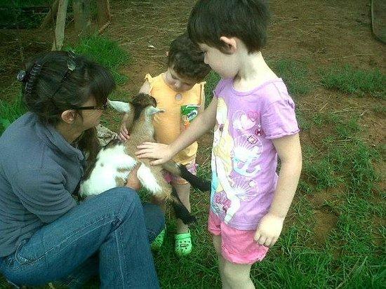 Lydenrust Guest Farm: Alison, Angel, Abigail and Nikita