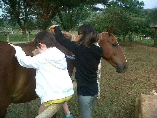 Lydenrust Guest Farm: Horsetime