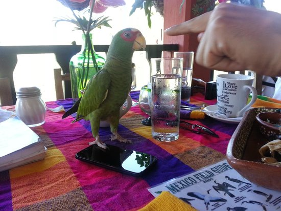 Vallarta Botanical Gardens : Diego, the wild parrot who came to visit our table