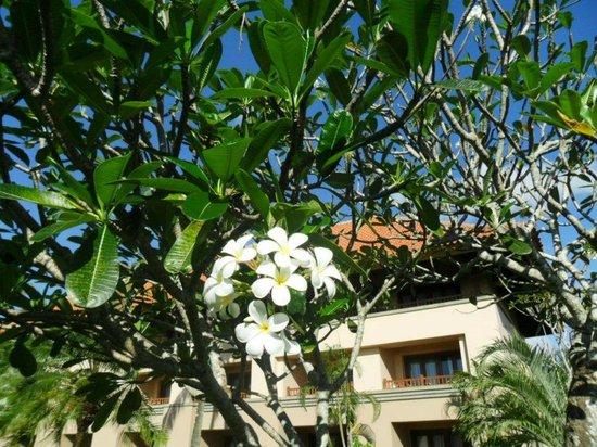 AYANA Resort and Spa : ゴルフ場付近、フランジパニの花