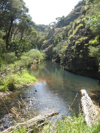 Kingfish Lodge: Scene from Totara North to Lane's Cove walk