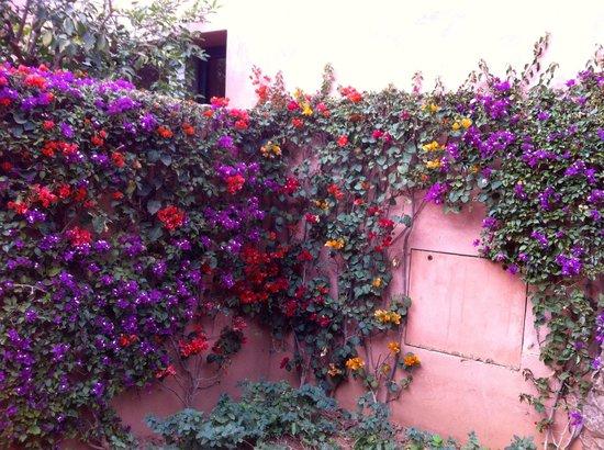 Amanjena: beautiful grounds