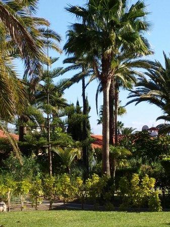 Sun Club Apartments: Trädgård