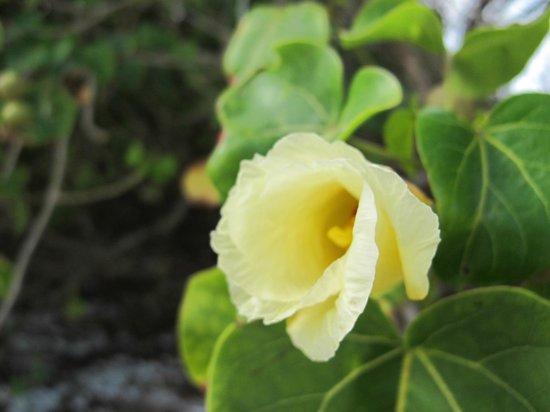 Nilaveli Beach Hotel: Eine Blume