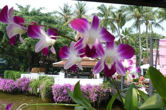 Anantara Riverside Bangkok Resort: View from the riverside pier