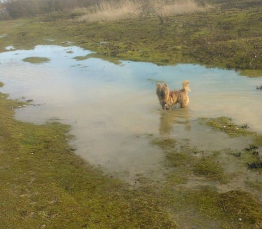The Forest of Marston Vale - Forest Centre: My Dog enjoying the walk!
