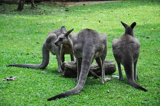 zoopark-kenguru-kazino
