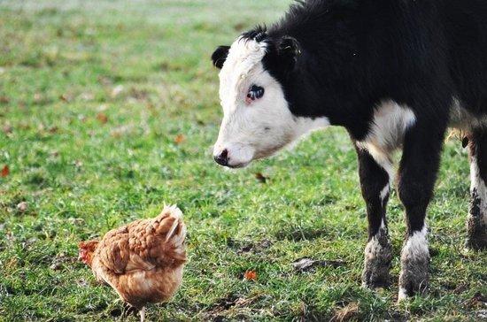 Highfields Happy Hens Farm