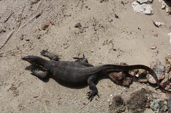 Pangkor Laut Resort : A lizard