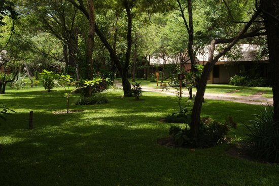 Camp Nkwazi: The gardens