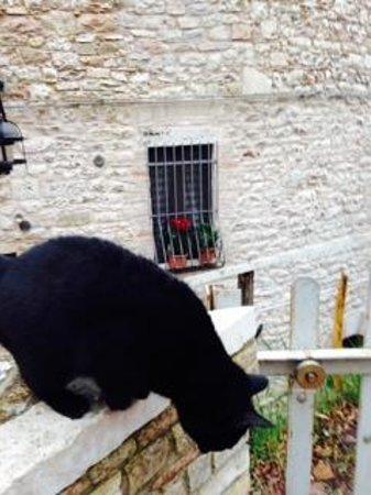 Anne's Italy : Gatti in Assisi