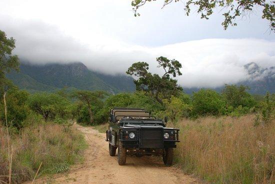 Moholoholo Forest Camp: Rahmen-Programm Game-Drive: In einem offenen Safari-Fahrzeug geht es durch das Moholoholo-Geländ