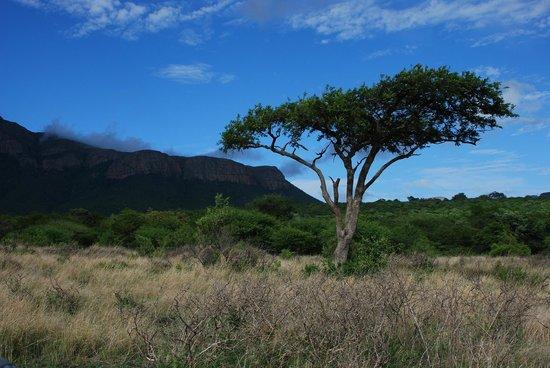 Moholoholo Forest Camp: Die Savannen-Landschaft des Geländes von Moholoholo.