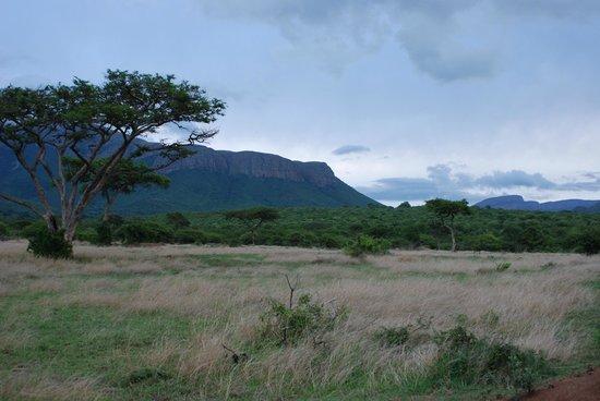 """Moholoholo Forest Camp: Die Big-Five gibt es nicht zu sehen: Auf den """"Game-Drives"""" besticht eher die Landschaft."""