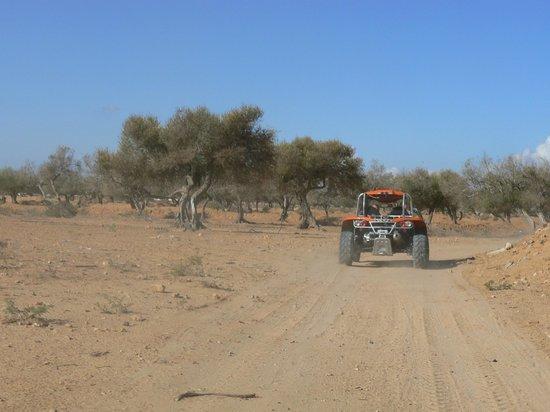 Seabel Aladin Djerba : buggy dans les oliviers