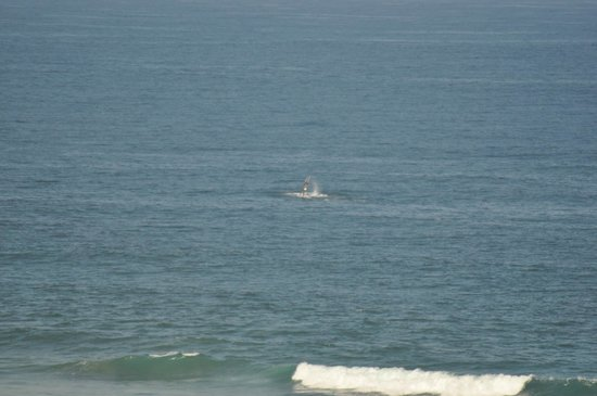 Dunes de Dovela eco-lodge: whales and their babies passed by on a daily basis.