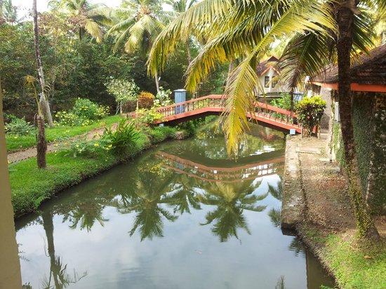 Club Mahindra Kumarakom: Stagnant water( carry mosquito repellant)