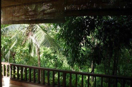 Jati 3 Bungalows: Aussicht in die Schlucht von einem Balkon