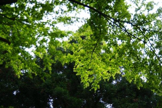 Jeolmul Natural Forest Resort : 절물자연휴양림