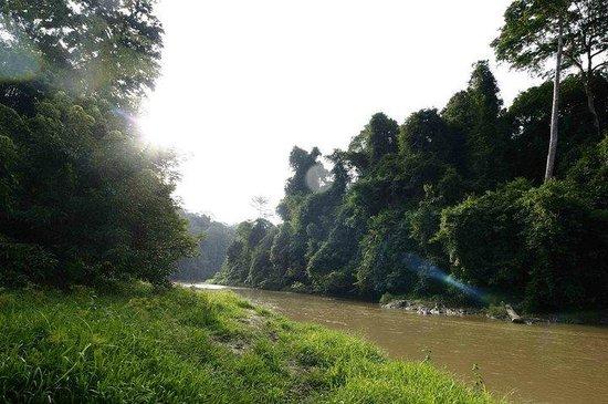 Earth Lodge Ulu Muda: Muda River