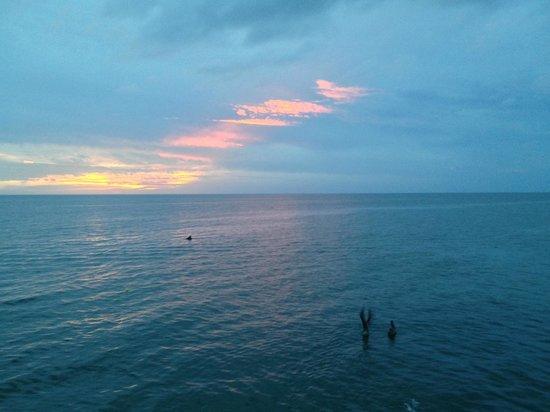JW Marriott Marco Island Beach Resort : Ocean