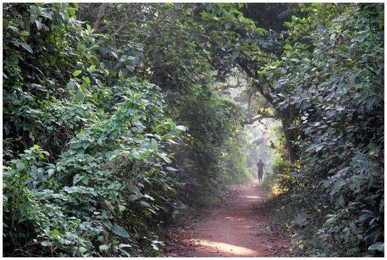 Chintamoni Kar Bird Sanctuary: The Jungle trail