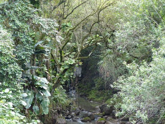 Waimea Valley: scenery
