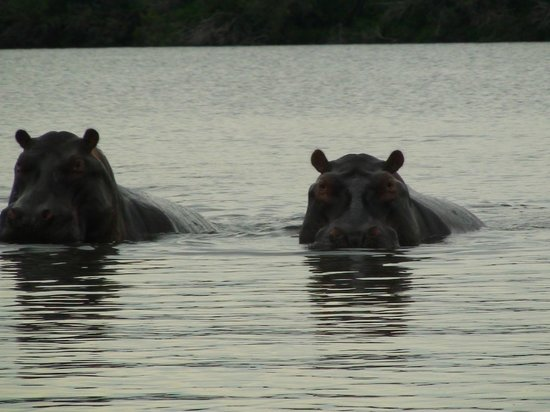 Xugana Island Lodge: hippo pool