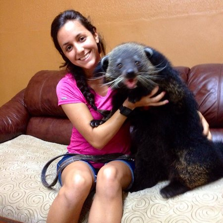 Zoological Wildlife Foundation: Indah the Binturong with her best friend and handler...Andrea