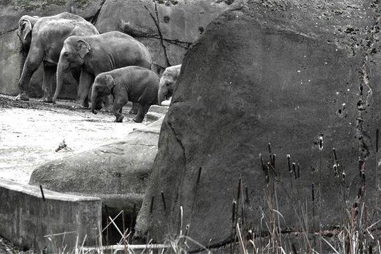 Kölner Zoo: les éléphants