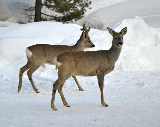 Hotel Roseg Gletscher: Naturschutzzone Wildbeobachtungen