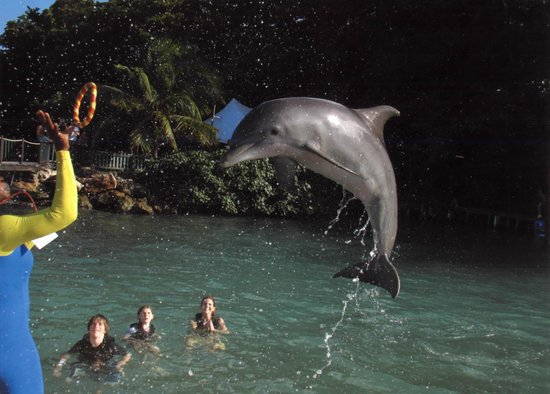 Dolphin Cove: Fun swimming with the dolphins