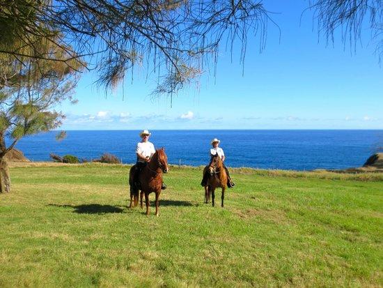 Kapaau, Havai: Hawaii Paso Finos Scenery