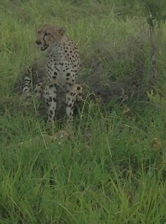 Elephant Plains Game Lodge: first on the wishlist, and first sighting of the very first drive!