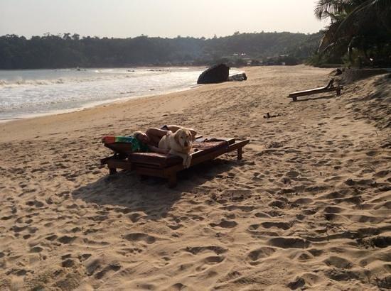 Hideout Lodge: immer genug Liegestühle