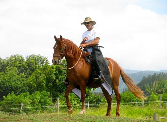 Hawaii Paso Finos: Proud Latin Heritage of the Horses