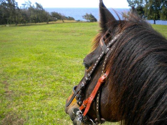 Hawaii Paso Finos: Enjoying the Views!