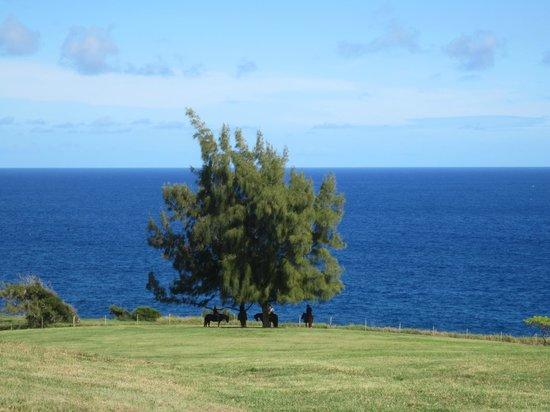 Hawaii Paso Finos: Whale Watching