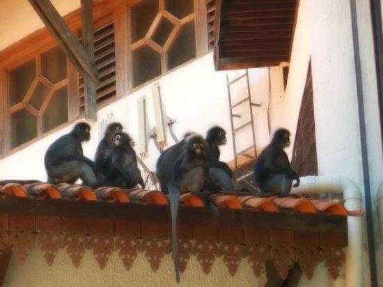 Berjaya Langkawi Resort - Malaysia: Unwanted guests?