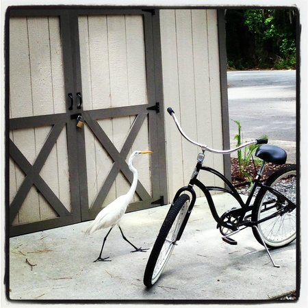 Skidaway Island State Park: This snowy egret is looking for a bike rental.