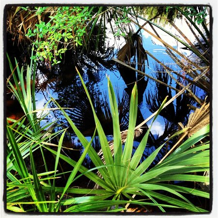 Skidaway Island State Park: Blue sky reflected in a stream.