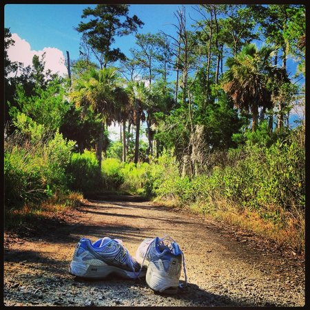 Skidaway Island State Park: Our trails are great for bird watching, wandering, or running.
