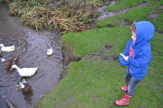 North Hayne Farm Cottages: Feeding Ducks