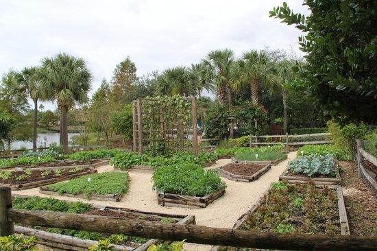 JW Marriott Orlando, Grande Lakes : The hotel's private vegetable garden